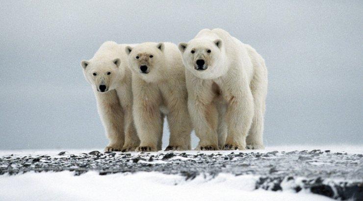 جفتري خرس قطبي خرید اینترنتی مستند،خرید انیمه،خرید کارتون قدیمی،خرید سریال ایرانی،فروش مستند،فروشگاه مستند
